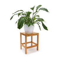 Blumenhocker Bambus Pflanze